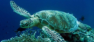 omilo-blog-sea-turtle SMALL